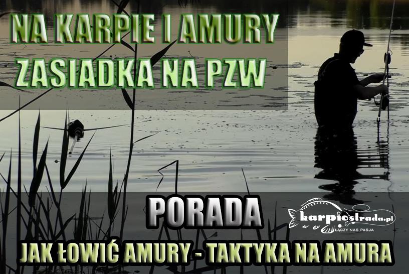JAK ŁOWIĆ AMURY | TAKTYKA NA AMURY | ZASIADKA NA PZW