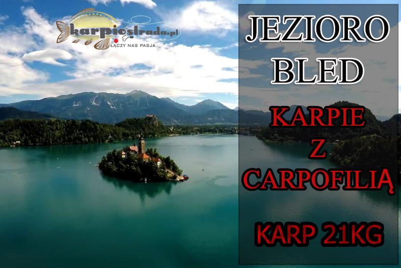 Jezioro Bled, Karpie z Carpofilią
