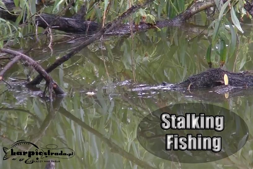 STALKING FISHING | BRANIE KARPIA Z POWIERZCHNI