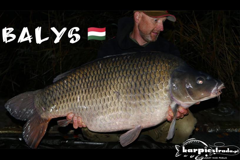 ŁOWISKO BALYS | WĘGIERSKI SEN 3X20 KG