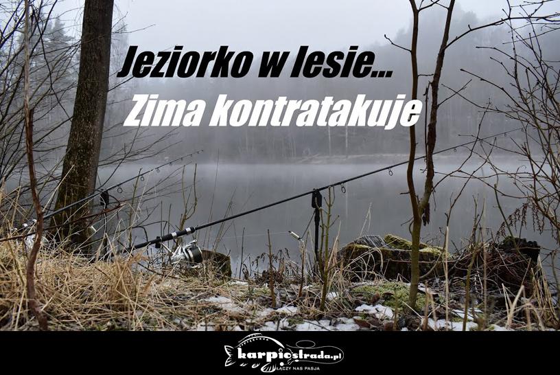 JEZIORKO W LESIE | MAGIC CARP LIFE